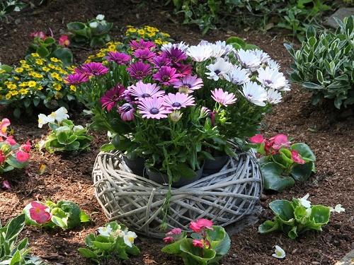 blumen thiel jetzt planen attraktive grabbepflanzungen. Black Bedroom Furniture Sets. Home Design Ideas
